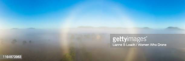 morning glory - lianne loach photos et images de collection