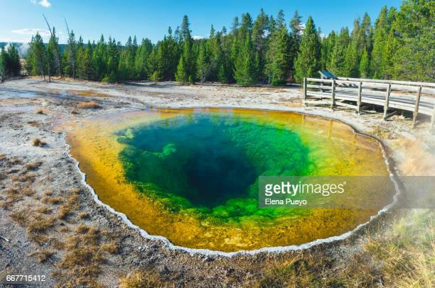Morning Glory Prismatic hot-spring, Yellowstone NP