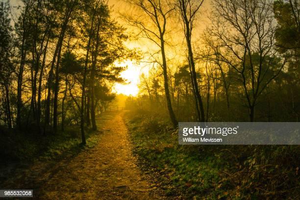 morning glow 'fence' - william mevissen ストックフォトと画像