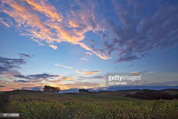 Morning glow in Biei countryside, Hokkaido