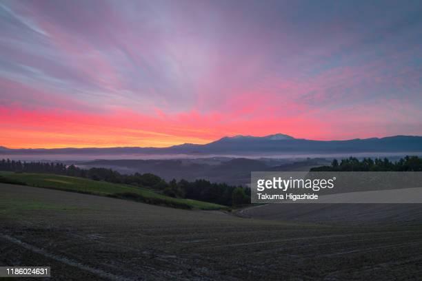 morning glow - 自然 ストックフォトと画像