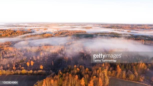 morning golden hour - estland bildbanksfoton och bilder
