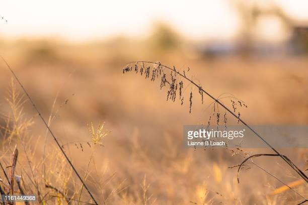 morning grass - lianne loach stock pictures, royalty-free photos & images