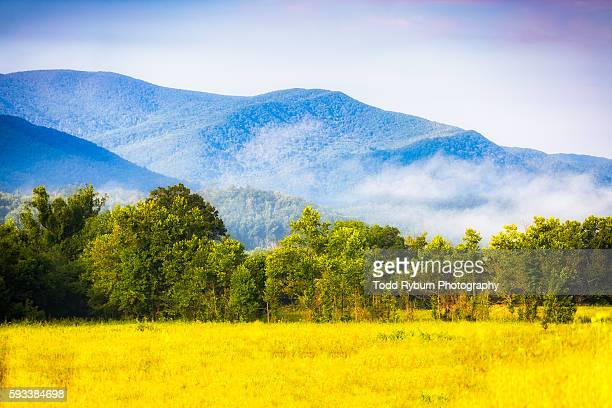 morning in cades cove - great smoky mountains stock pictures, royalty-free photos & images