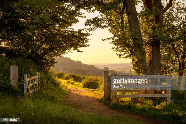 morning in countryside, guildford, surrey, uk - surrey england stock pictures, royalty-free photos & images