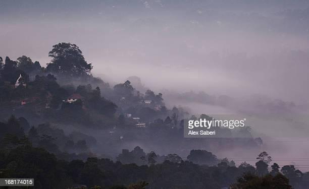morning in kandy with mist settled over the landscape. - alex saberi stock-fotos und bilder