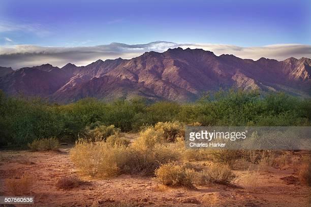 Morning in Sonora Desert at Phoenix, Arizona