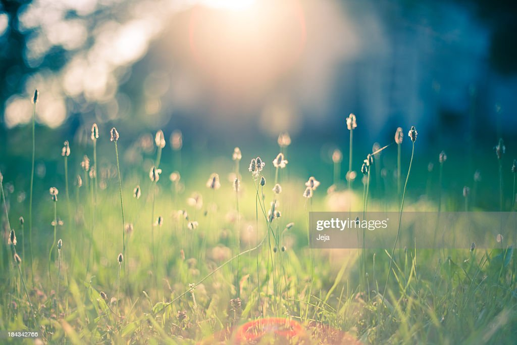 Morning in the field : Stock Photo