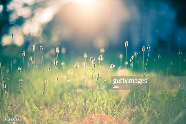 morning in the field - green color stock pictures, royalty-free photos & images