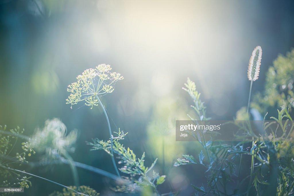 Morning in the field : Stockfoto