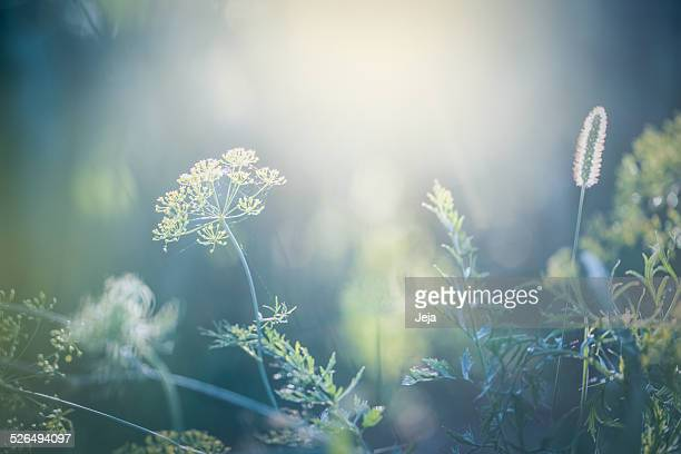 morning in the field - gras stock pictures, royalty-free photos & images
