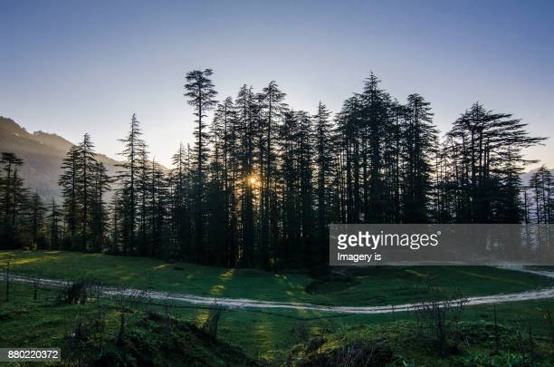 morning in the himalayan jungle - shimla stock pictures, royalty-free photos & images