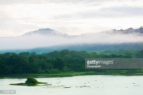 la mañana en el bosque tropical - estado del amazonas brasil fotografías e imágenes de stock