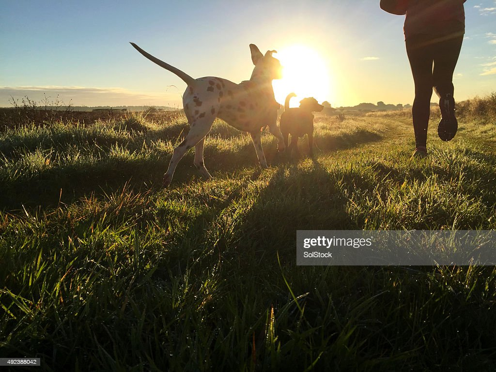 Morning Jog with the Dogs : Stock Photo
