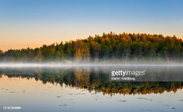 morning lake with fog in autumn colors - fog stock pictures, royalty-free photos & images