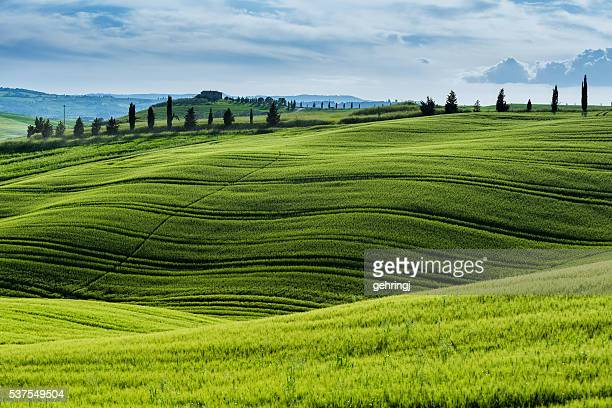 morning landscape from tuscany - siena italy stock photos and pictures