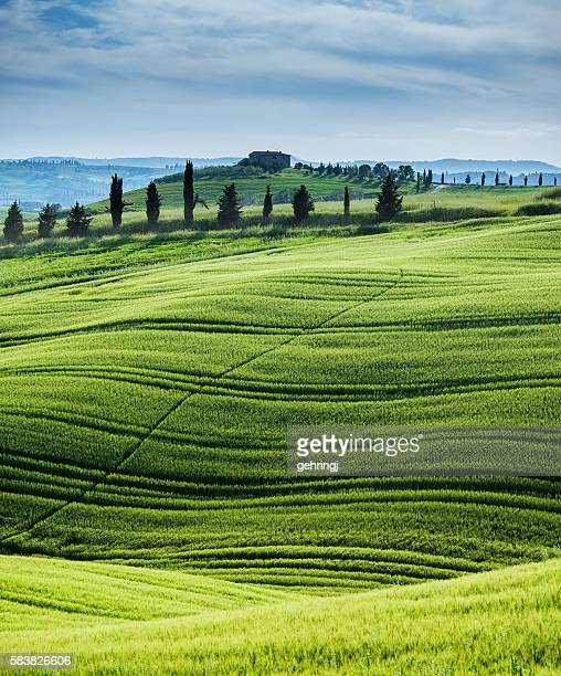 Morning landscape from Tuscany