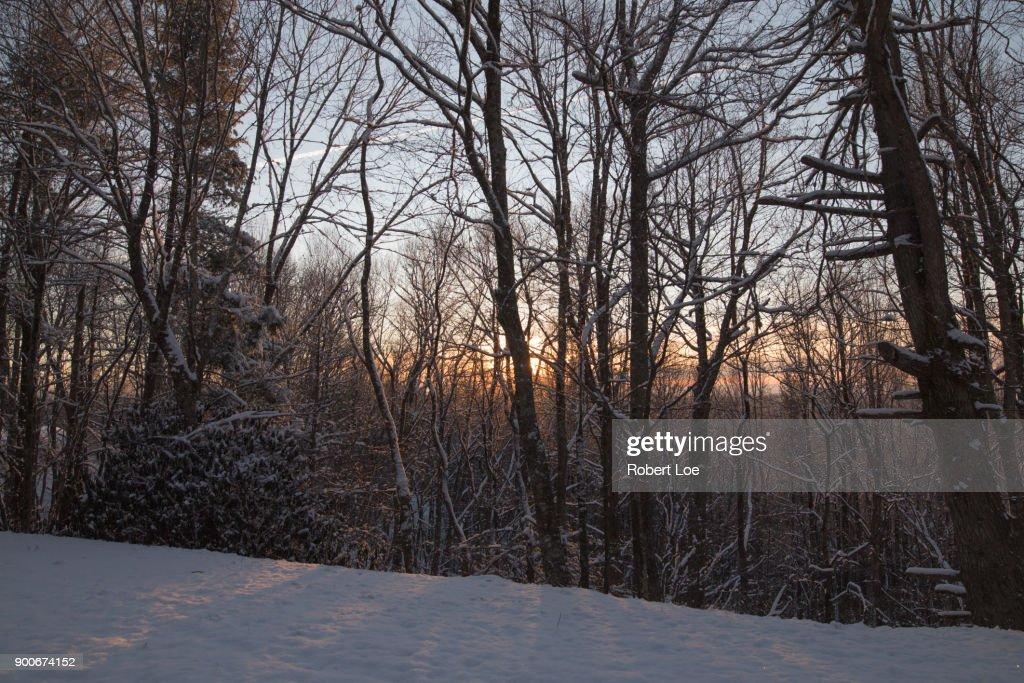 Morning Light 2 : Stock Photo