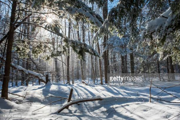 morning light after a snowstorm. - murray mccomb stock pictures, royalty-free photos & images