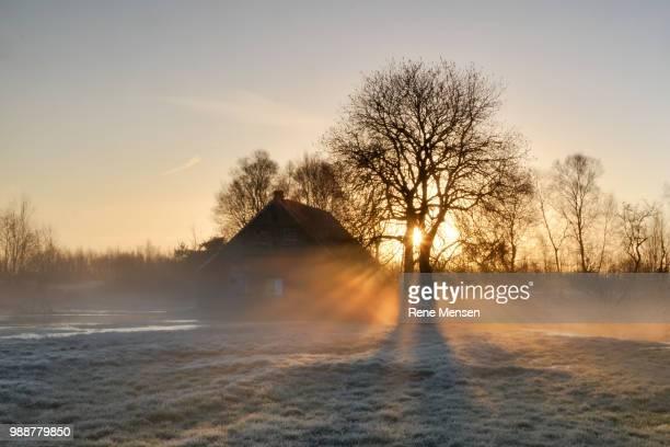Morning light II