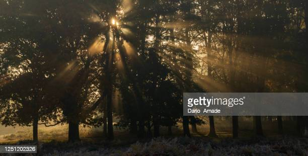 morning light in the nature - season stock pictures, royalty-free photos & images