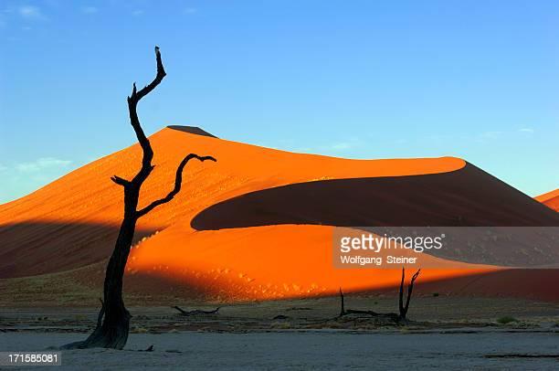 Morgensonne auf der Düne mit Baum in den Vordergrund