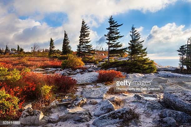 morning light on bear rocks - monongahela national forest stock photos and pictures