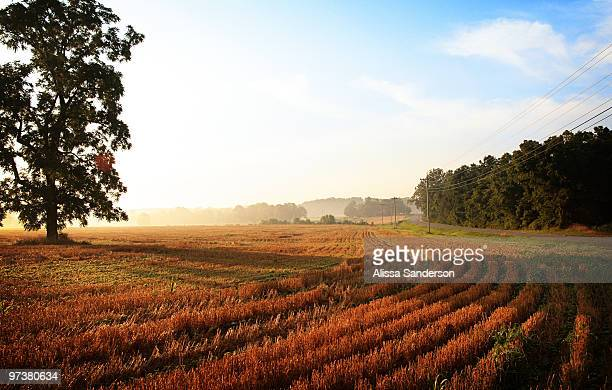 morning light on wheatfield - kentucky stock pictures, royalty-free photos & images