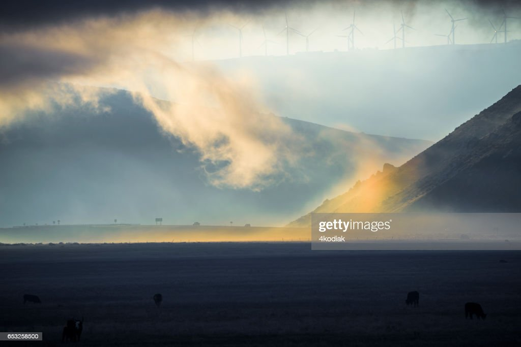 Morning Light : Stock Photo