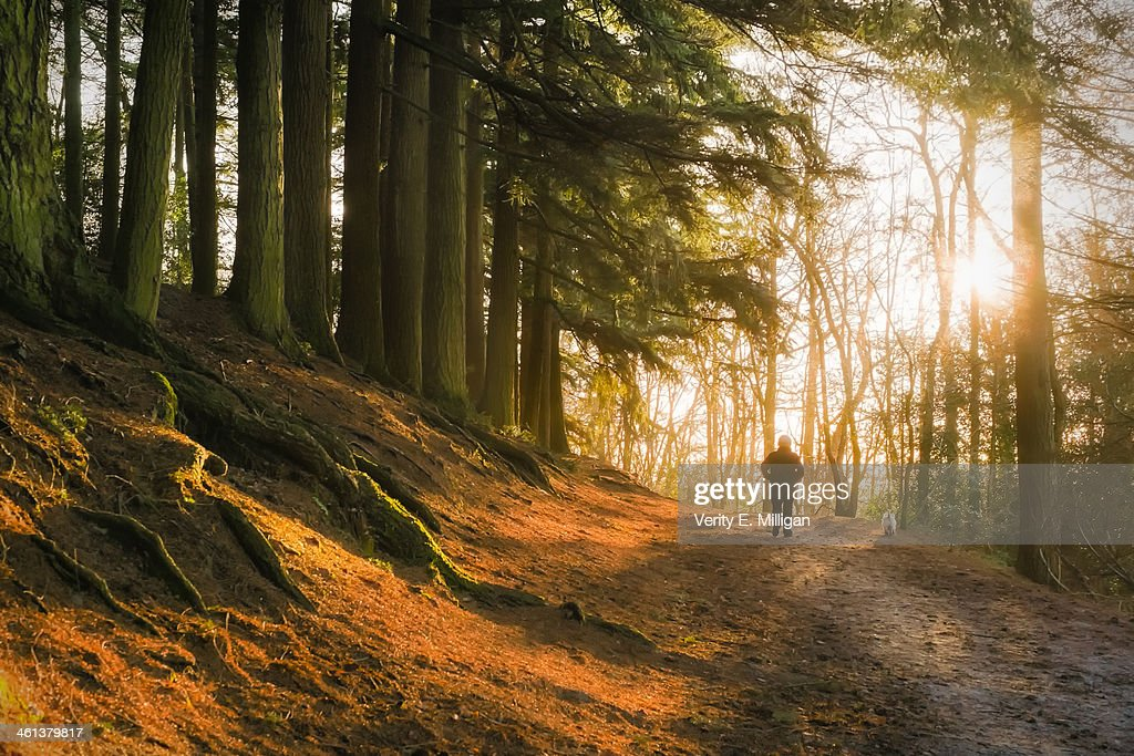 Morning Light through Winter Trees : Stock Photo