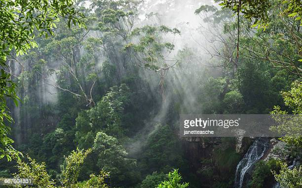 Morning mist above Twin Falls, Springbrook National Park, Queensland, Australia