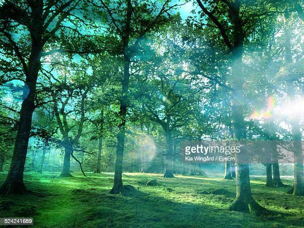 Morning Mist And Sunlight In Forest