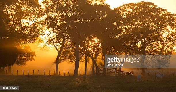 morning mist at a farm in the pantanal. - alex saberi stockfoto's en -beelden