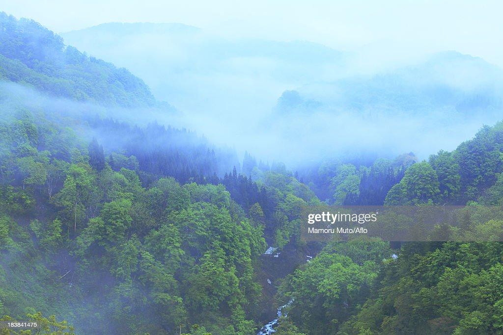 Morning mist at Mount Gassan, Yamagata Prefecture : Stock Photo