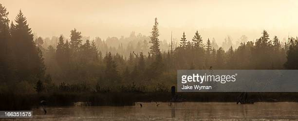 Morning mist at sunrise over the woods in northern Maine, as seen from a kayak on Spencer Pond.