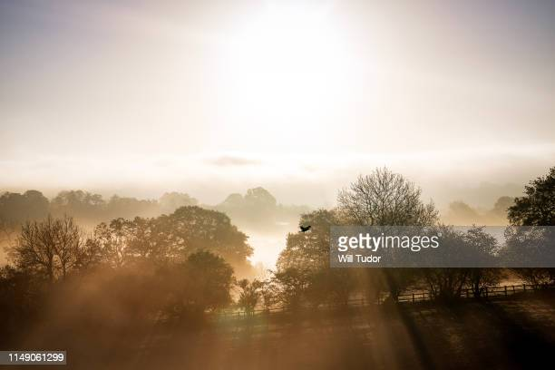 morning mist in warwickshire - morning stock pictures, royalty-free photos & images
