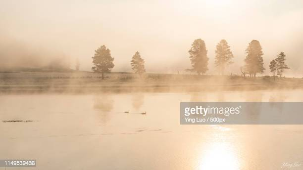 morning mist in yellowstone - yellowstone river stock photos and pictures