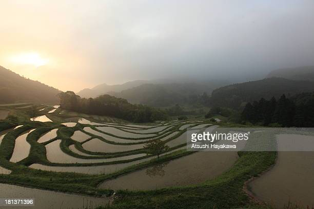 morning mist of a terrace paddy field - 千葉県 ストックフォトと画像