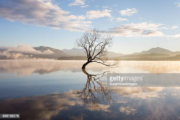 morning mist on lake - tranquility stock pictures, royalty-free photos & images