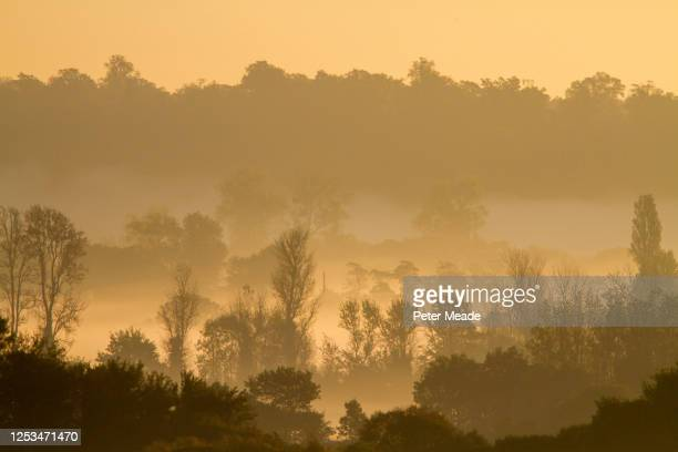 morning mist on woodland - berkshire england stock pictures, royalty-free photos & images