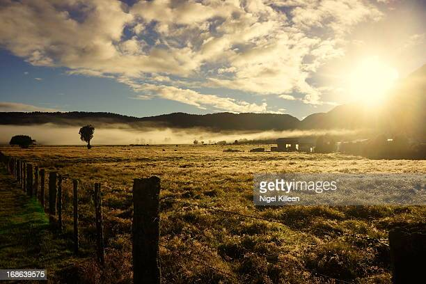 morning mist - farm stock pictures, royalty-free photos & images