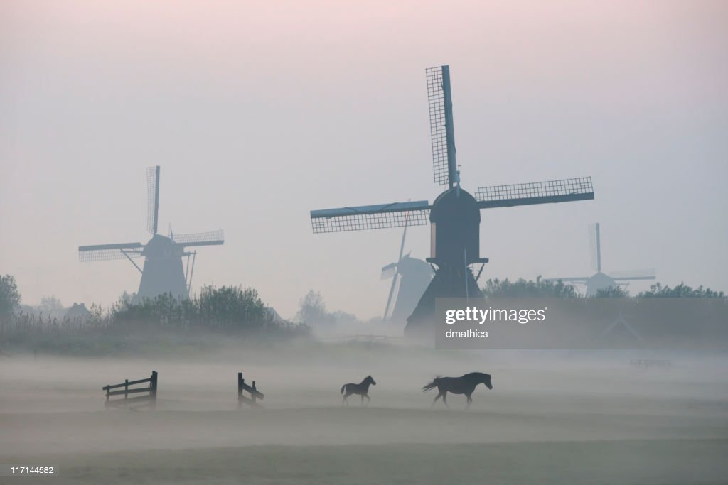 Morning mist surrounds foal and mare while walking before windmills : Stock Photo