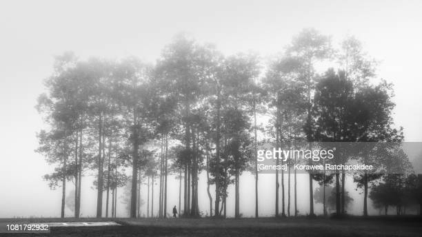 morning misty in black and white color - ramo parte della pianta foto e immagini stock