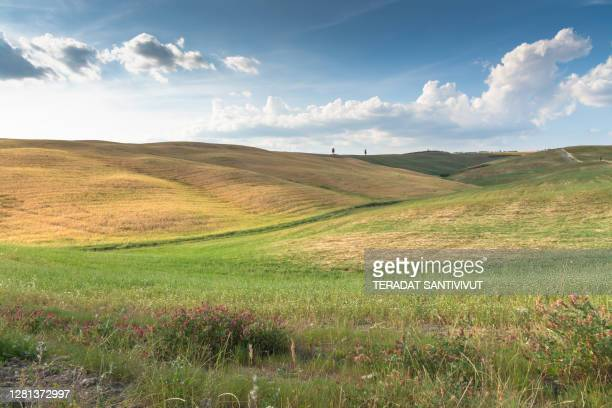 morning natural scenics view rural landscape green top hill typical curved road with cypress at crete senesi in toscana, italia, europe - italia stockfoto's en -beelden