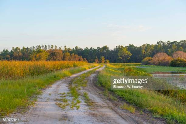 morning on a trail at orlando wetlands park - swamp stock pictures, royalty-free photos & images