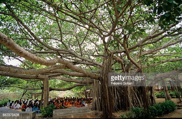 Morning prayer under a holy Banyan The Foundation was established in 1936 by Rukmini Devi to be a center of training and performance of the...