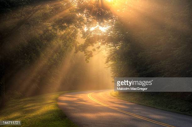 Morning rays on rural road