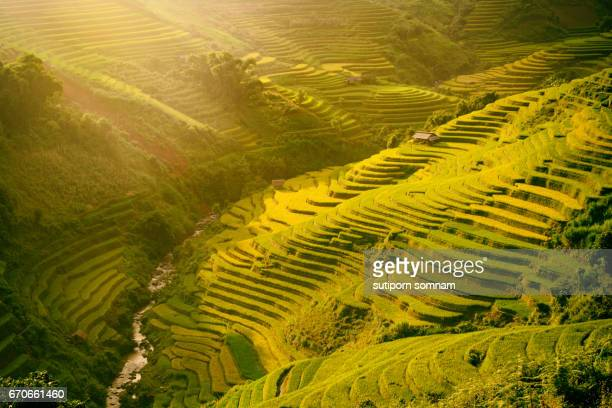 Morning rice terraces in the gorge.