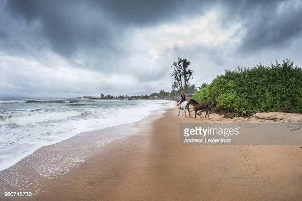 morning ride on the beach - côte d'ivoire stock pictures, royalty-free photos & images