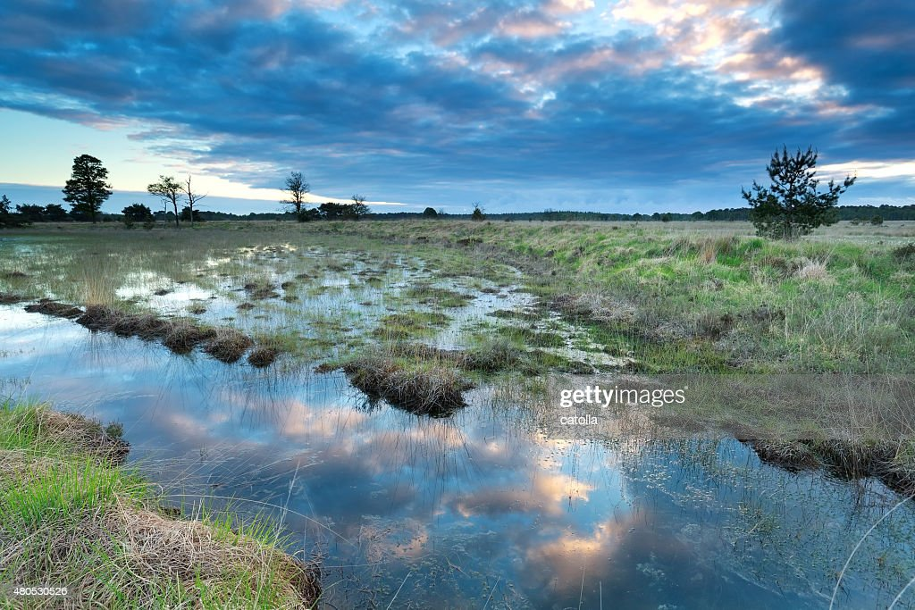 morning sky reflected in swamp water : Stock Photo
